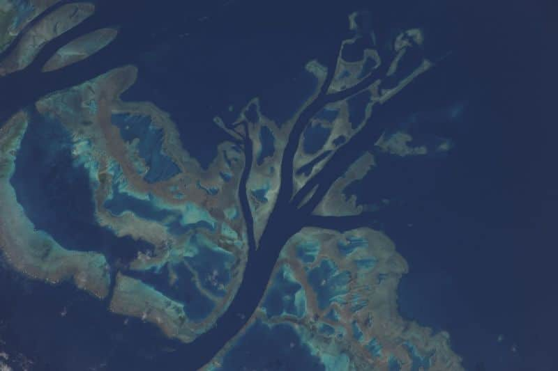 21. Вспышка цвета, движения и жизни на холсте нашего удивительного мира. Это часть Большого Барьерного рифа у восточного побережья Австралии, заснятая через объектив 1200 миллиметра. Думаю, даже великие импрессионисты были бы поражены этой естественной картиной.