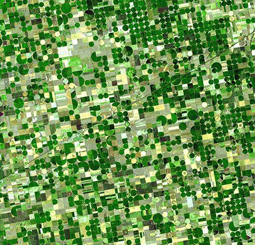 Юго-запад Канзаса. Кукуруза, пшеница и сорго.