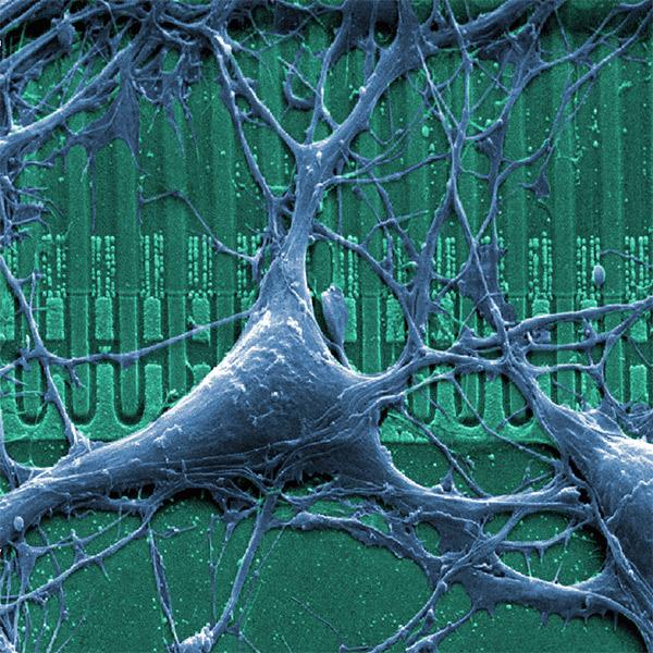 граффити, искусство, Компьютер из искусственных нейронов, который сможет читать и нюхать