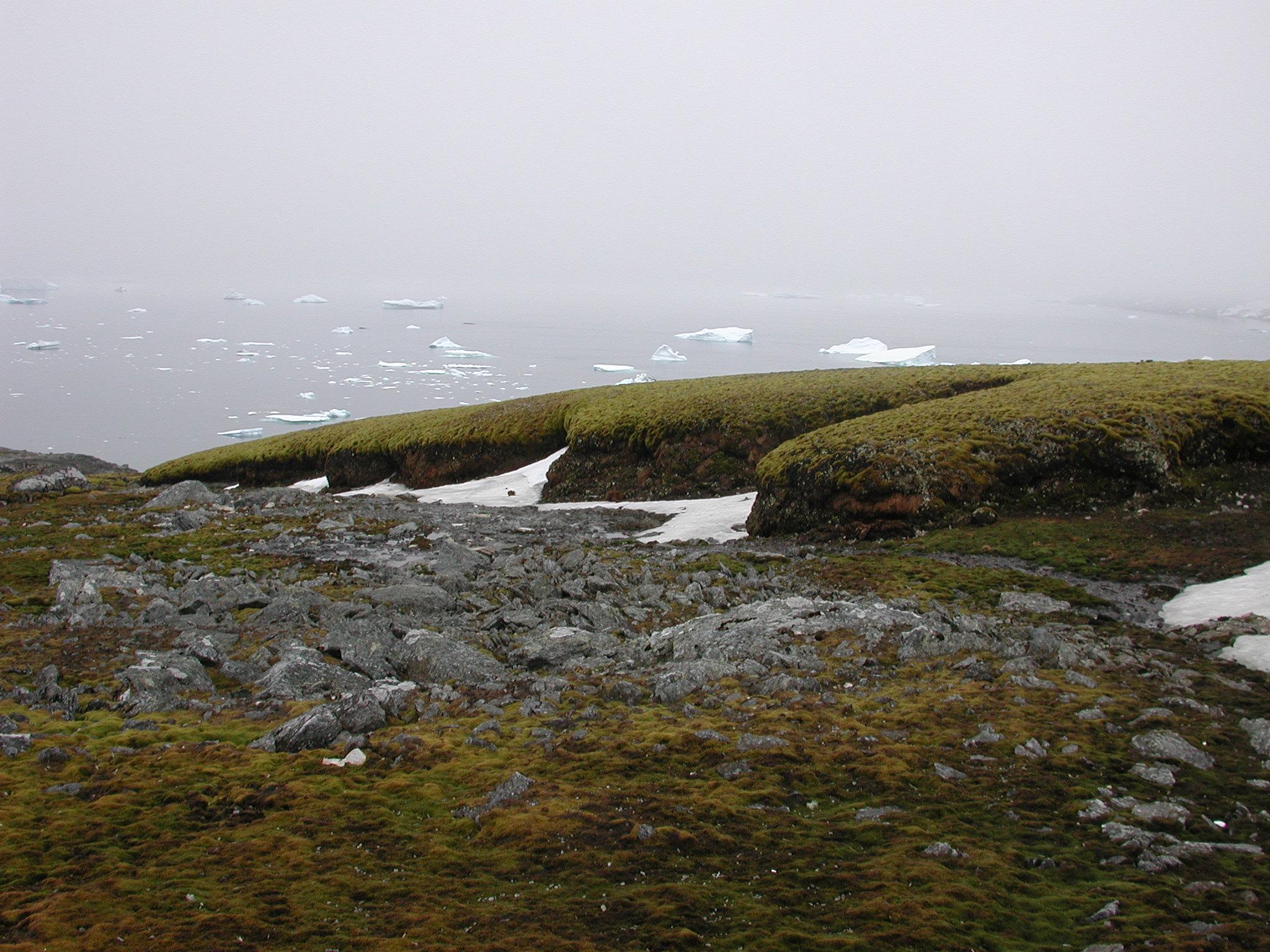 образ мхи в антарктиде фото состав