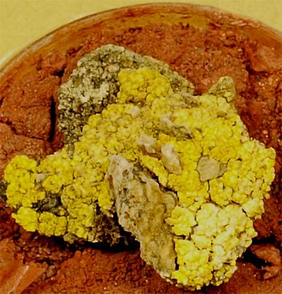 Лишайник P. chlorophanum на почве, аналогичной марсианской